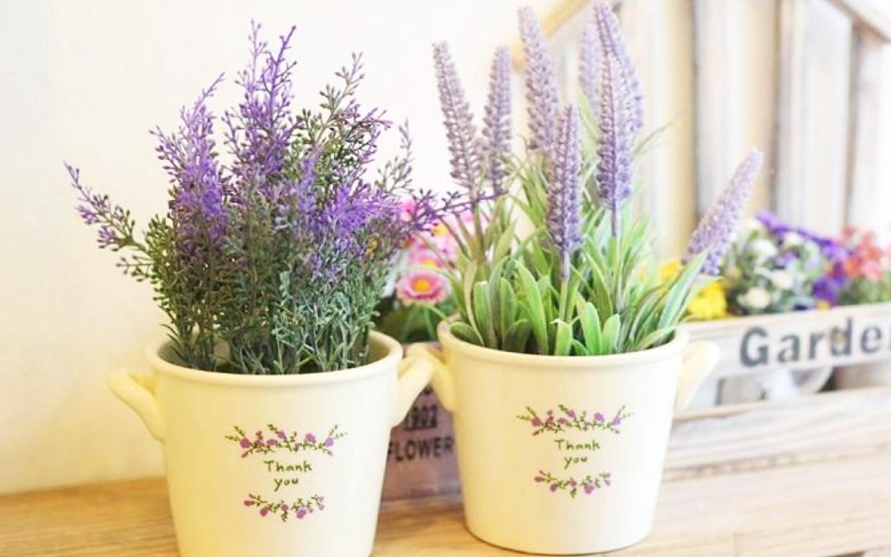 Hướng dẫn cách trồng hoa Lavender - lavenderhanoi.com