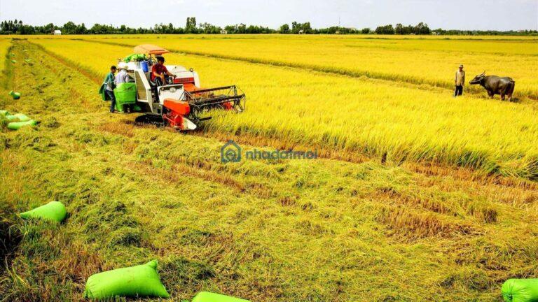 Thủ tục mua bán đất nông nghiệp